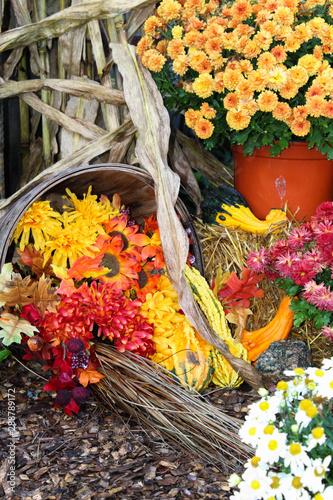 Vászonkép Fall display of flowers and cornstalks