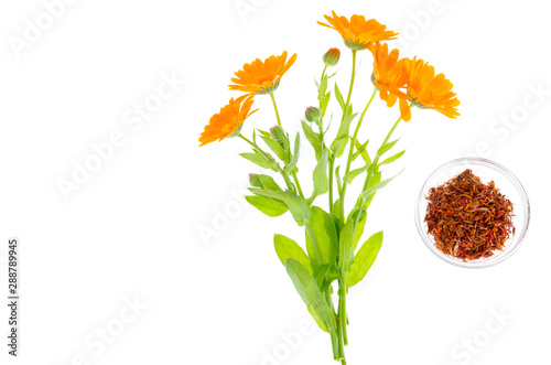 Fotomural  Medicinal plant with orange flowers Calendula officinalis