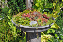 Aloe And Cactus Birdbath Planter