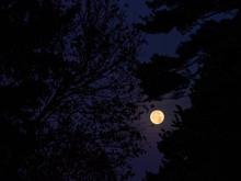 Full Moon Through Trees At Night
