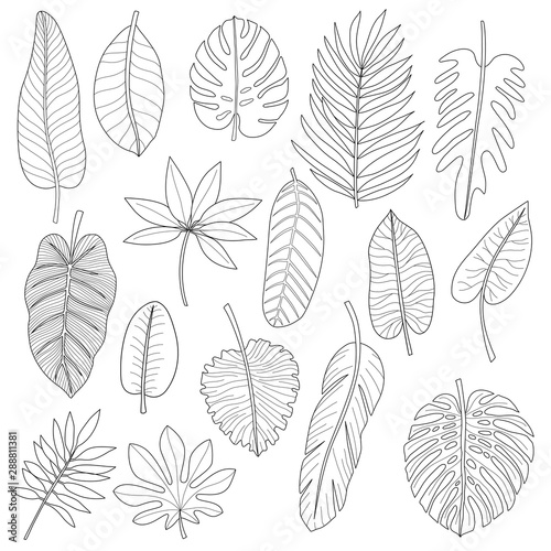 Fototapety, obrazy: Leaves of tropical plants. Black outline set