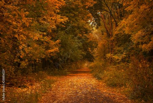 Poster Autumn Autumn landscape, cloudy rainy foggy day in the park, selective focus