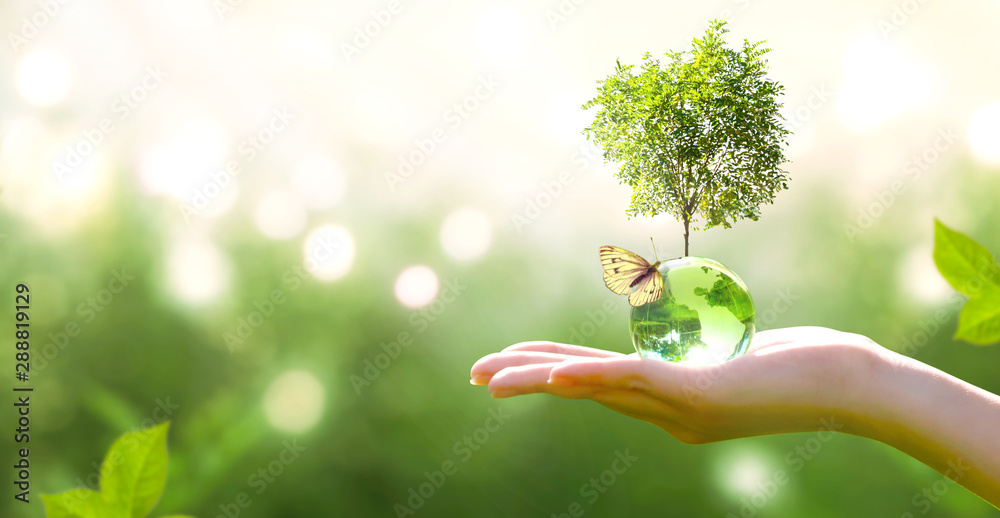 Fototapety, obrazy: Earth crystal glass globe ball and growing tree in human hand, flying butterfly on green background. Saving environment, save clean planet, ecology concept. Card for World Earth Day.