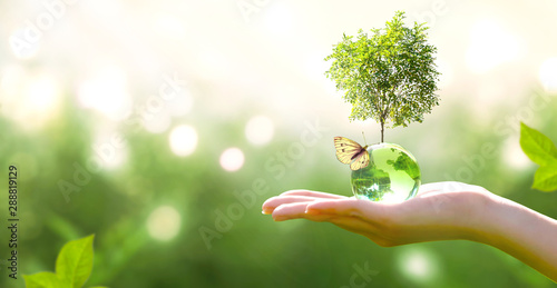 plakat Earth crystal glass globe ball and growing tree in human hand, flying butterfly on green background. Saving environment, save clean planet, ecology concept. Card for World Earth Day.