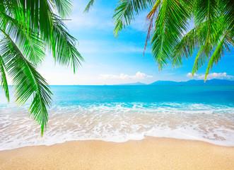 Fototapetatropical beach with coconut palm