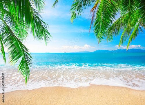 tropical beach with coconut palm - 288826123
