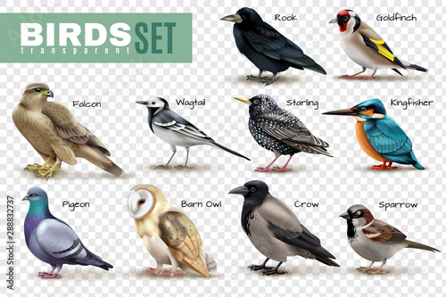 Realistic Birds Transparent Set