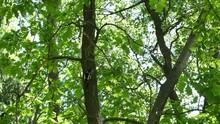 The Woodpecker Flies Away From A Tree.