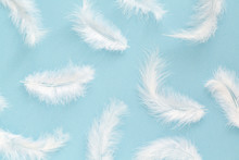 Fluffy White Feathers On Blue Background. Minimalist Style. Abstract Background.