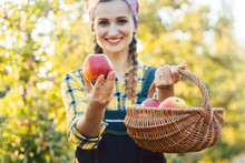 Woman On Fruit Orchard Showing...