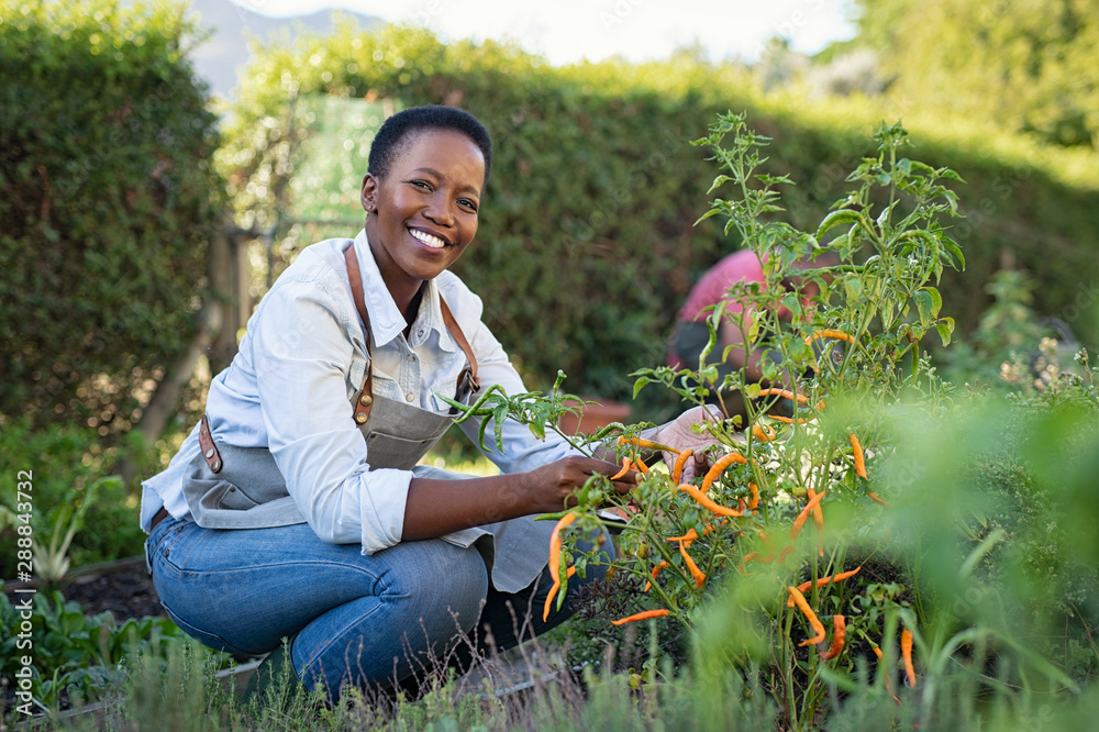 Fototapeta Satisfied woman working at vegetable garden