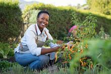 Satisfied Woman Working At Vegetable Garden
