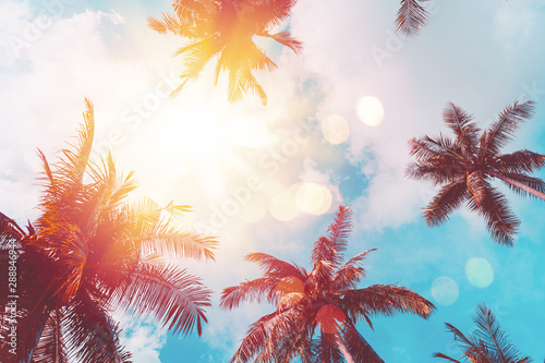Foto auf AluDibond Palms Tropical palm tree with colorful bokeh sun light on sunset sky cloud abstract background.