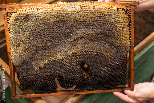 Fresh bee honey from honeycomb Wallpaper Mural