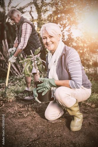 Female gardener potting plant in garden