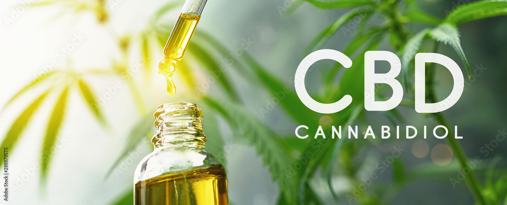 Fototapeta CBD droplet dosing a biological and ecological hemp plant herbal pharmaceutical cbd oil from a jar. Concept of herbal alternative medicine, cbd oil, pharmaceutical industry