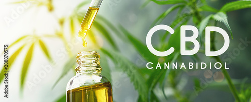 Fototapeta CBD droplet dosing a biological and ecological hemp plant herbal pharmaceutical cbd oil from a jar. Concept of herbal alternative medicine, cbd oil, pharmaceutical industry obraz