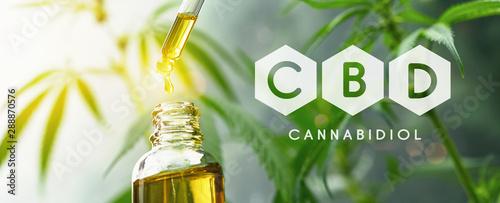 Fototapeta CBD droplet dosing a biological and ecological hemp plant herbal pharmaceutical cbd oil from a jar. Concept of herbal alternative medicine, cbd oil, pharmaceutical industry obraz