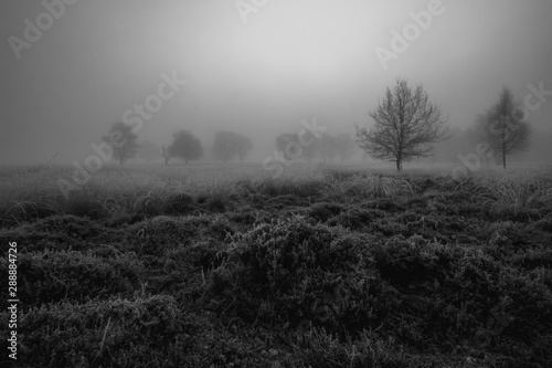 Foto auf Leinwand Grau Spooky tree landscape in the fog Black and white