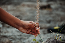 Hand Picking Flower From Garden.
