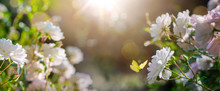 Summer Floral Background, Whit...