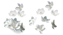 White Jasmine Flowers Perfect Realistic Vector Illustration. Flowers Flying, Falling And Lying In Heap With Detailed Yellow Stamens And Shadow, Isolated On White Background, Set Of Design Elements