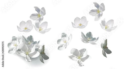 White jasmine flowers perfect realistic vector illustration Tableau sur Toile