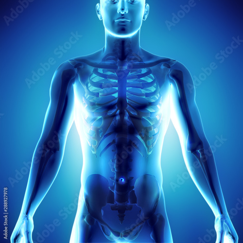 Pinturas sobre lienzo  3d medical illustration of human body showing skeletal system in x-ray