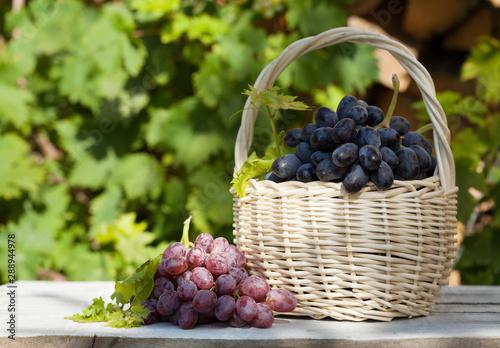 Obraz na plátně  Colorful grapes