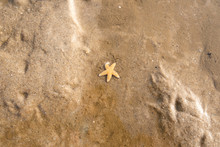 Small Starfish Lying In Sand O...