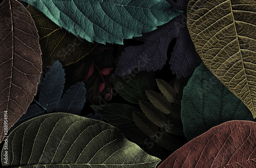 Canvas Prints Floral Abstract pattern from beautiful textured leaves on black background. Illustration