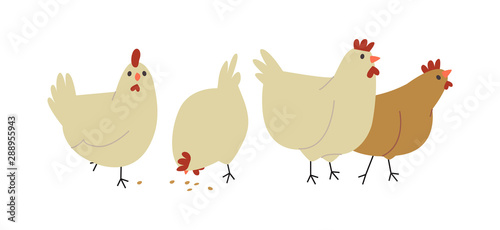 Cute farm chicken hen bird group isolated Fototapet