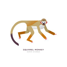 Wild Squirrel Monkey Isolated ...