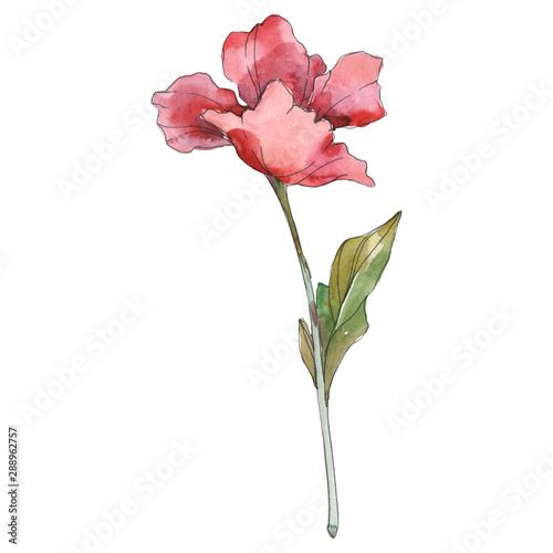 Poppy floral botanical flower. Watercolor background illustration set. Isolated poppy illustration element. - 288962757