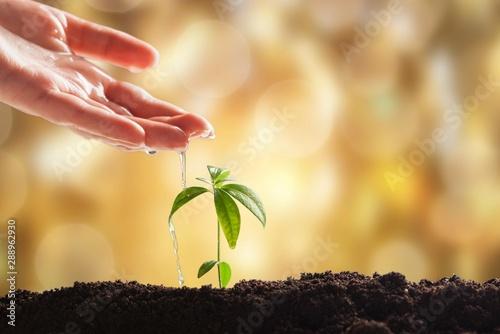 Poster Vegetal Plant.
