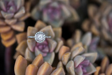 Round Halo Diamond Ring Nestled In Desert Rose Succulent, Ghost Plant Succulent With Wedding Ring