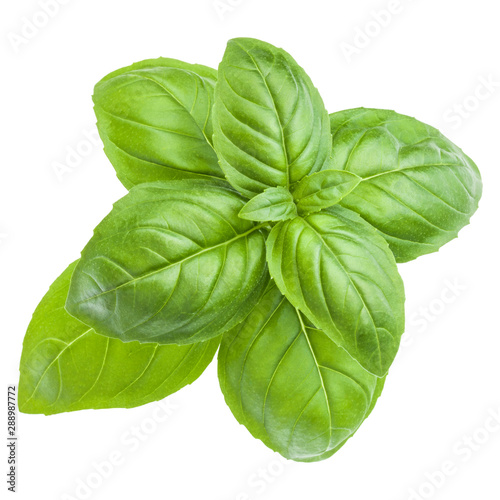Cuadros en Lienzo  Fresh sweet Genovese basil leaves isolated on white background cutout