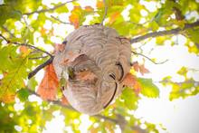 Beecomb On Tree - Image