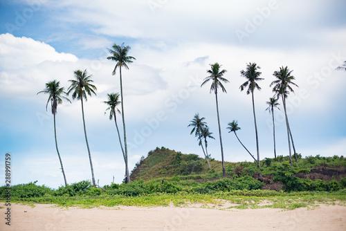 Line of palms along beach