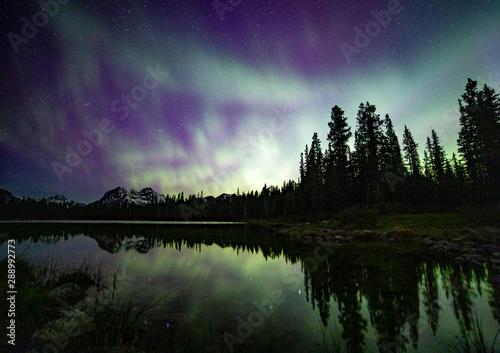 Foto auf Gartenposter Nordlicht Aurore boréale avec forêt dessous