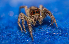 Wild Spider Macro Photography