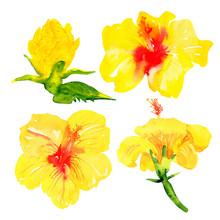 Set Of Yellow Hawaiian Hibiscu...