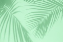 Tropical Palm Leaves Shadows On Mint Color Textured Wall Background.