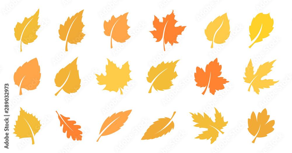 Fototapeta Autumn leaf set