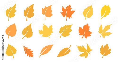Obraz Autumn leaf set - fototapety do salonu