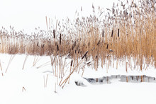 Winter Landscape With Dry Coastal Reed