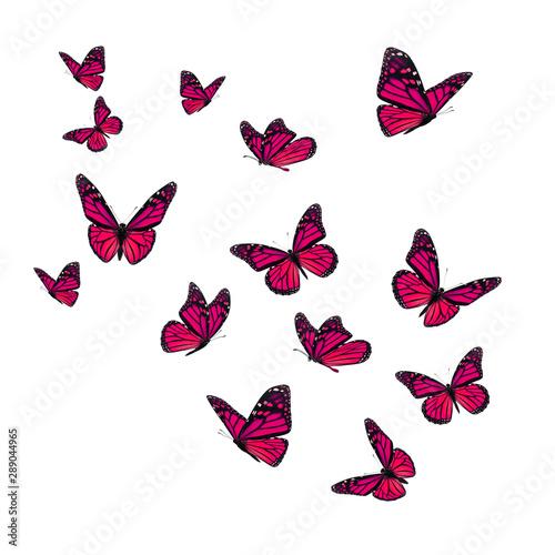 Obraz na plátně  Beautiful pink monarch butterfly