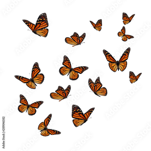 Beautiful monarch butterfly Wallpaper Mural