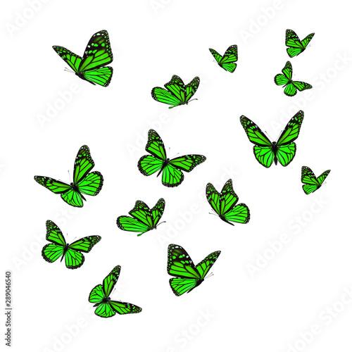 Fotografie, Obraz  Beautiful green monarch butterfly