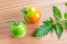 採りたてのミニトマト